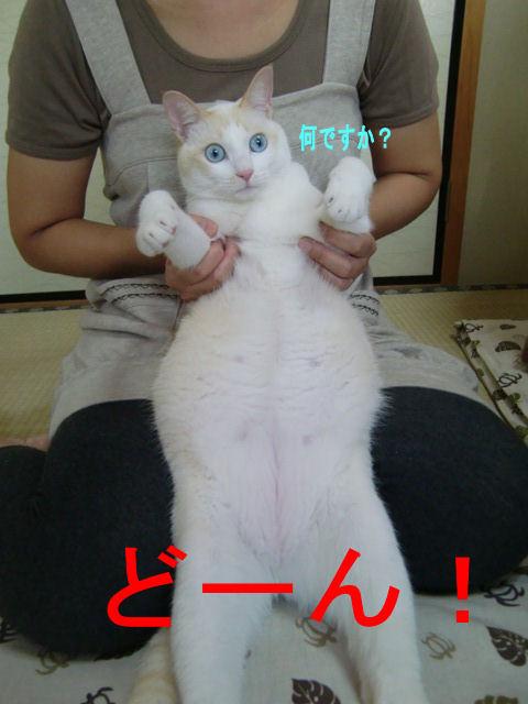 Cimg2375_2